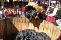 Fiesta Vendimia Rioja Alavesa