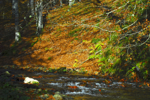Bosques Navarros, otoño, Selva Irati