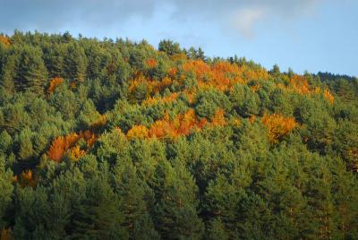 Bosques Navarros, otoño