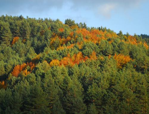 Bosques navarros, viaje a la mística de los bosques