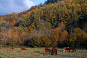 Bosques Navarros, otoño, caballos