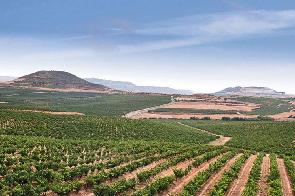 Sostenibilidad en producción vinícola, viñedos Bodegas Faustino