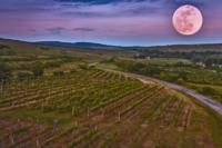 Luna, vino y cosecha, vendimia, embotellado vino