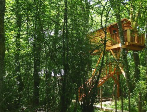 Navarra vino y siesta en los árboles