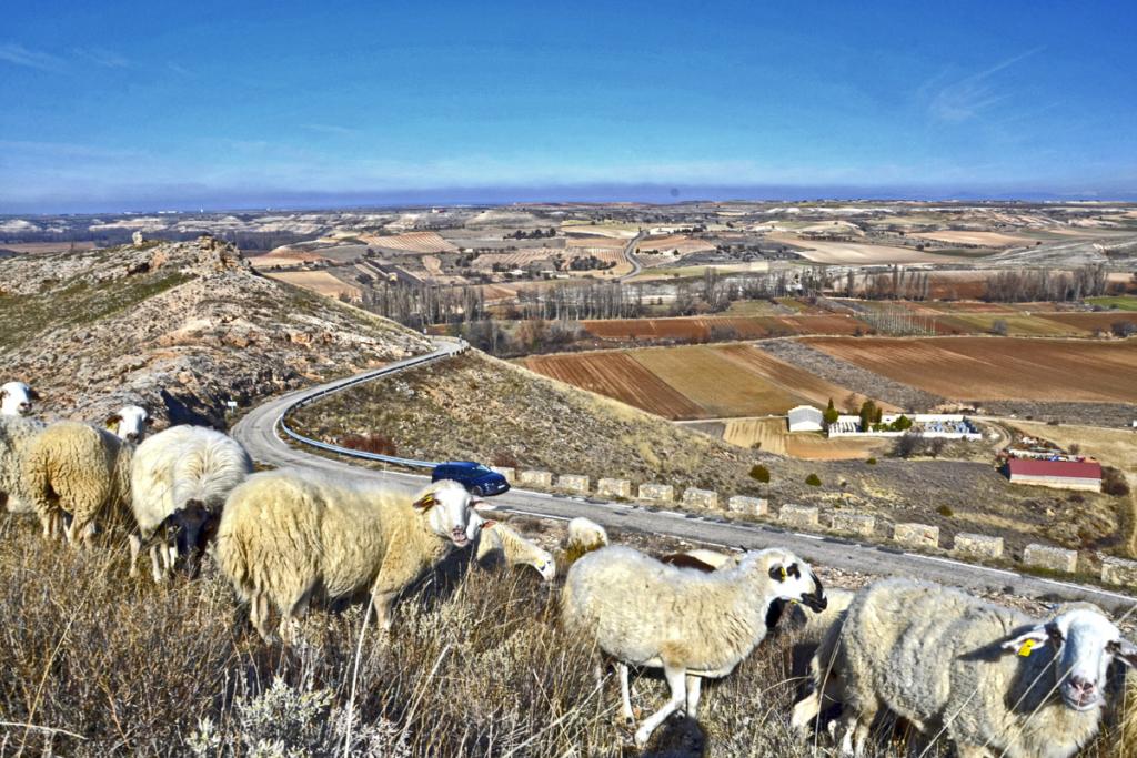 Diez caprichos alrededor de Bodegas Portia, Parque Natural Hoces del Río Riaza