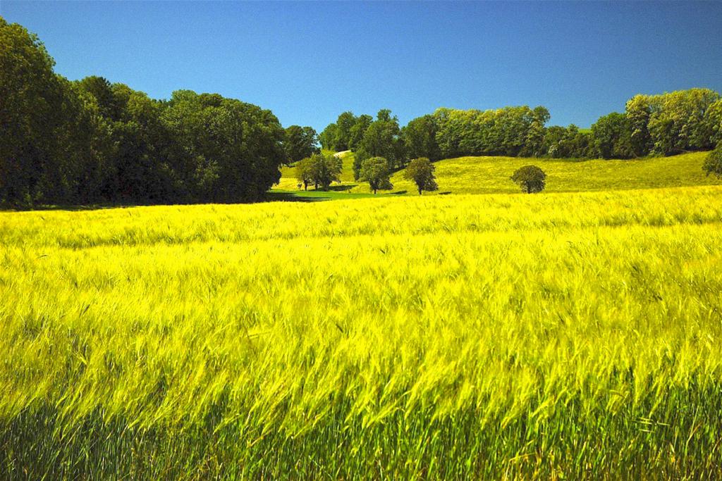 Primavera en La Mancha